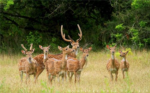 Kheoni Wildlife